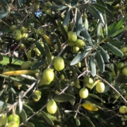 rappresentanza importazione distribuzione olio di oliva